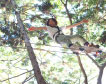自然共生型アウトドアパーク フォレストアドベンチャー(箱根)