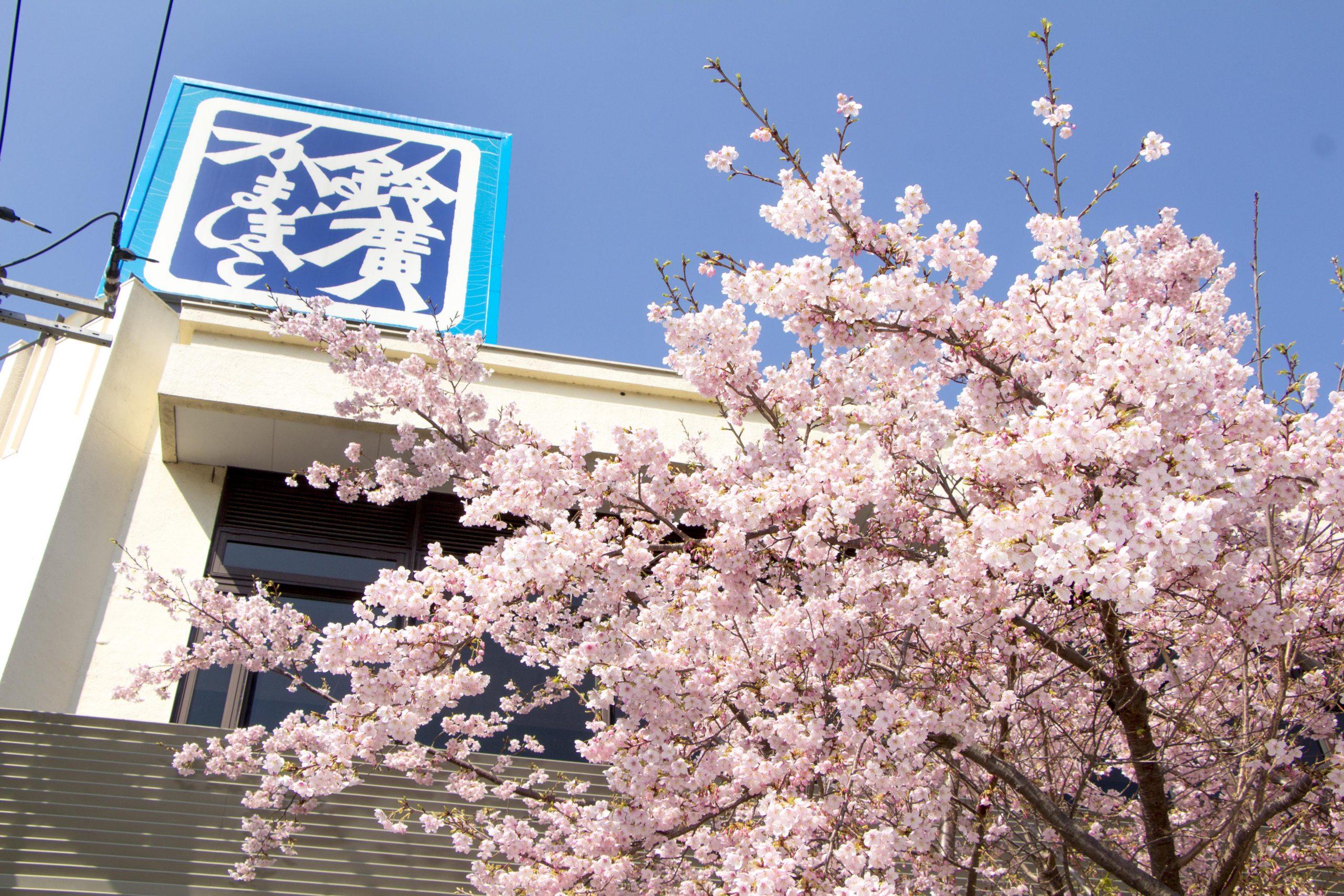 かまぼこの里「一足先に春を楽しむお花見スポット」