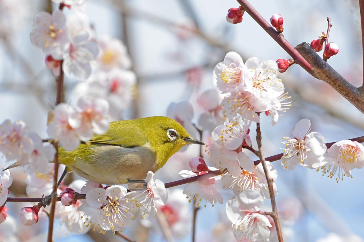 春の暮らしに使えるお弁当箱や茶葉、茶碗など