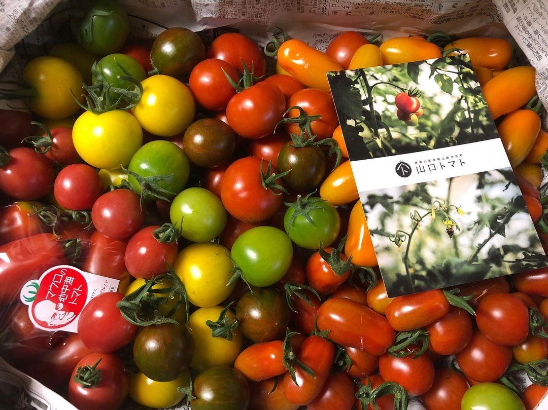 ③山口トマトの自根栽培トマト