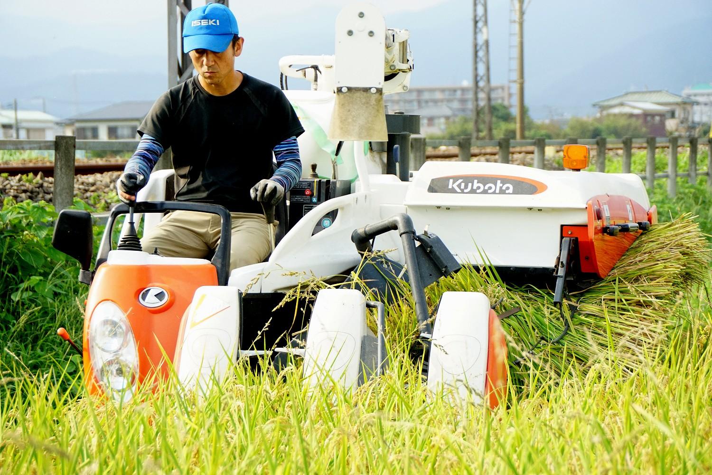 志村屋米穀店の農薬も化学肥料を使用しない田んぼ